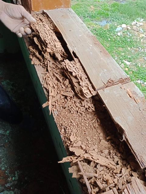 Von Termiten zerfressene Fensterbank